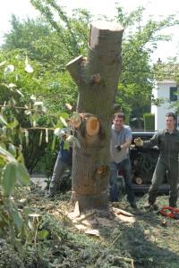 Abattage arbre 6