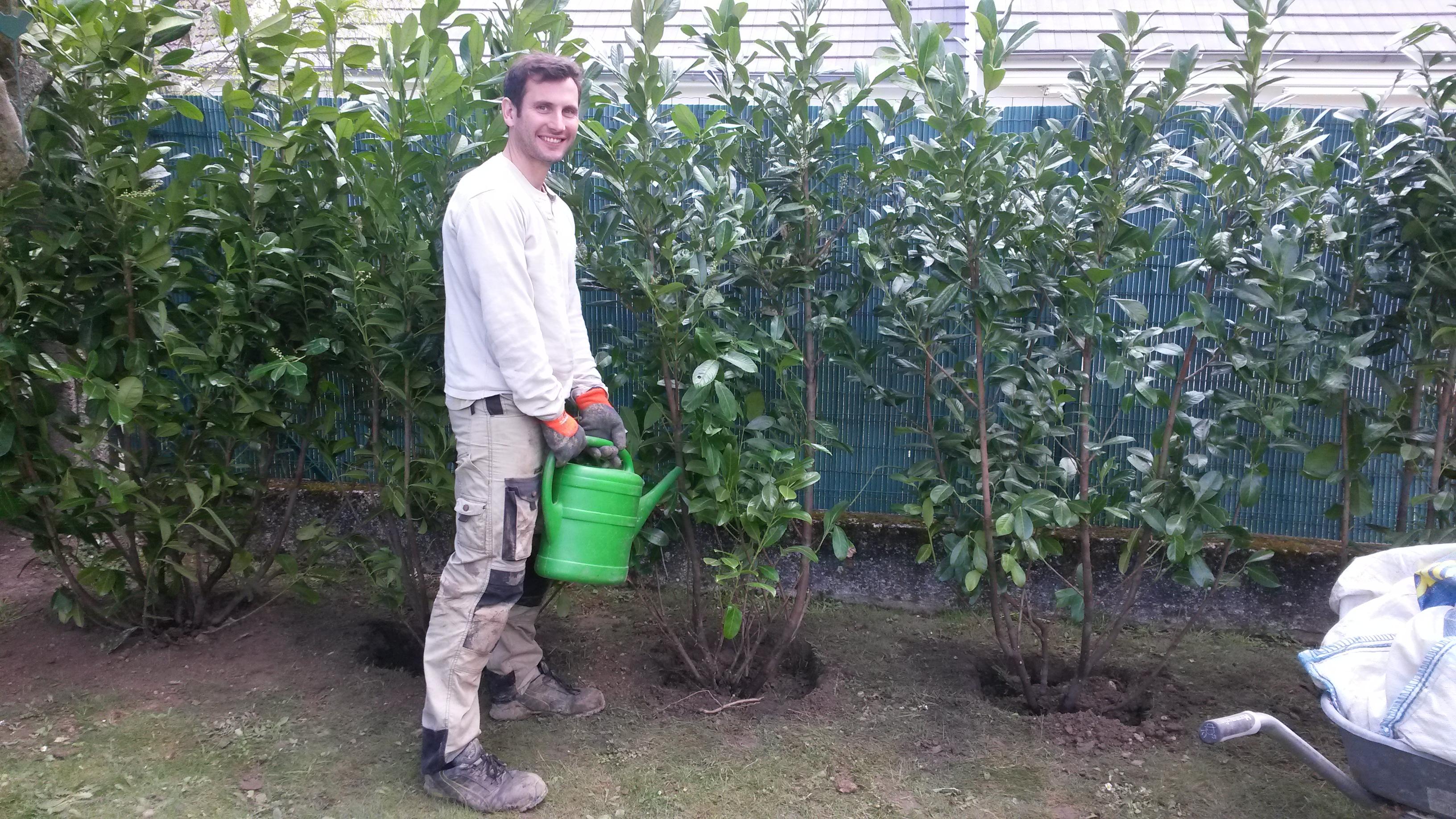 Plantation haie